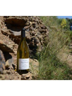 """Côtes du Roussillon """"Les Terrasses"""" Blanc"""