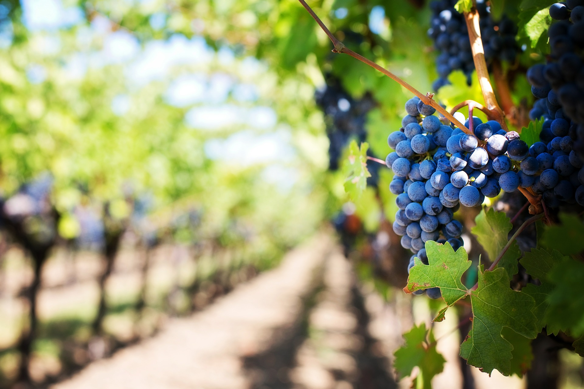 Découvrez les Terrasses du Domaine Boucabeille, un vin gourmand et plaisir !