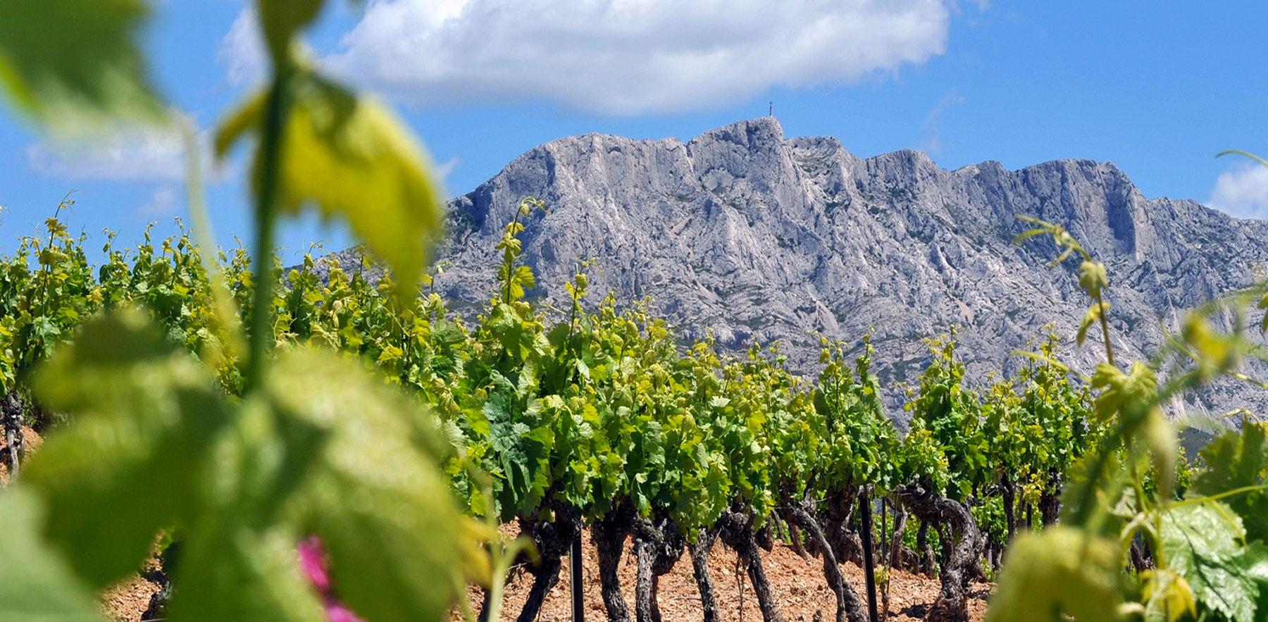 Découvrez notre sélection de vins bios, biodynamiques et natures !